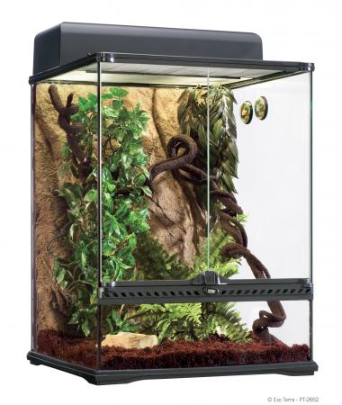 Pet Chameleon Tank lol-rofl.com