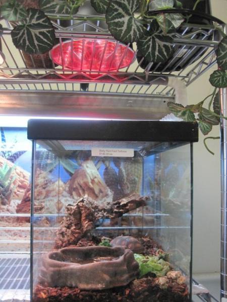 Review Of Reptile Heat Bulbs